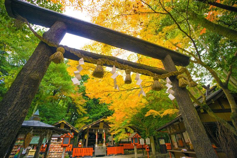 京都 野宮神社 紅葉 写真1