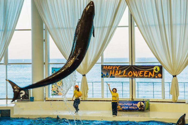 アクアワールド大洗水族館 イルカ・アシカオーシャンライブ 写真7