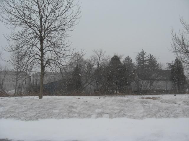 Magical Narnia snow