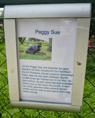 Informationsschild über Peggy Sue auf Gut Streiflach.