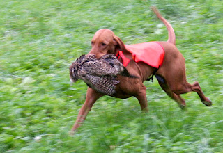 "Herta ""Millie"" apporterar fasan. september 2010"