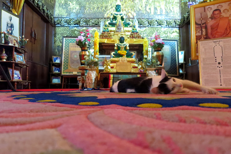 Cat enjoying Wat Buppharam's carpet