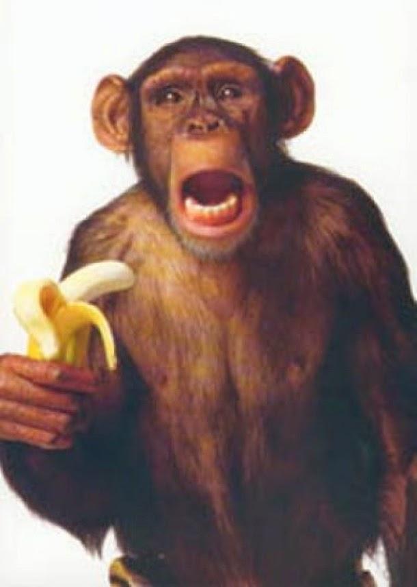 experimento de monos y plátanos