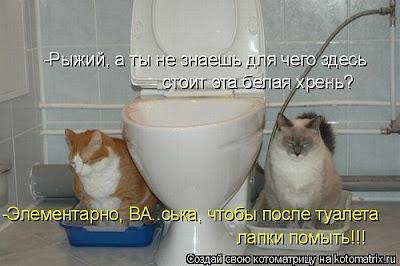 Кот и унитаз