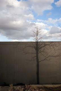 Character & Tree