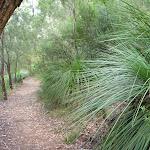 Grass Trees abound (392444)