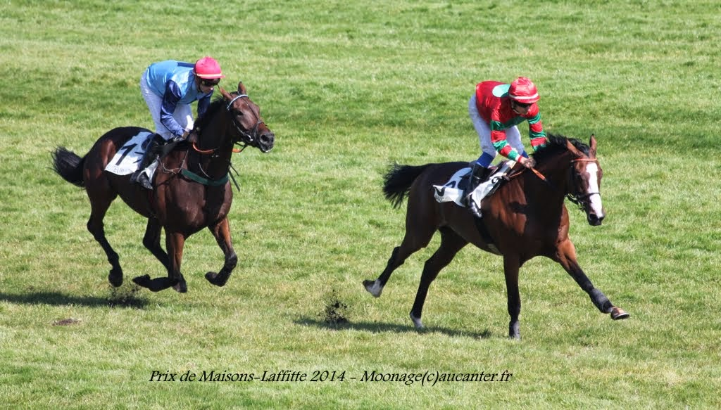 Photos Auteuil le 27-09-2014 IMG_4381