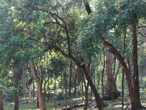 Marayoor Marayur | Marayur Sandalwood Forest | Sandalwood Forest in