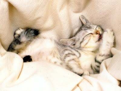 gambar kucing unyu-unyu gambar unyu-unyu terbaru gambar lucu anak kucing kumpulan gambar unyu-unyu anak kucing bertengkar gambar anak kucing tidur gambar anak kucing bermain