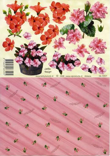 GL 6001 Betsy Lurvink-bloemen+achtergrond.jpg