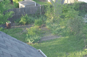 del ray, alexandria, yard, flooding, rain garden, permeability, overgrown, landscaping
