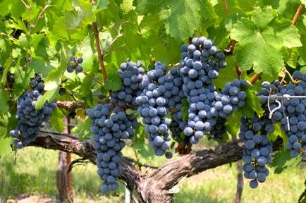 Westcave Cellars Winery