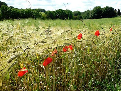 Эти зёрна упали в благодатную почву. Изображение сайта ПАЛОМНИК, Дюссельдорф