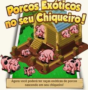 Porcos Exóticos