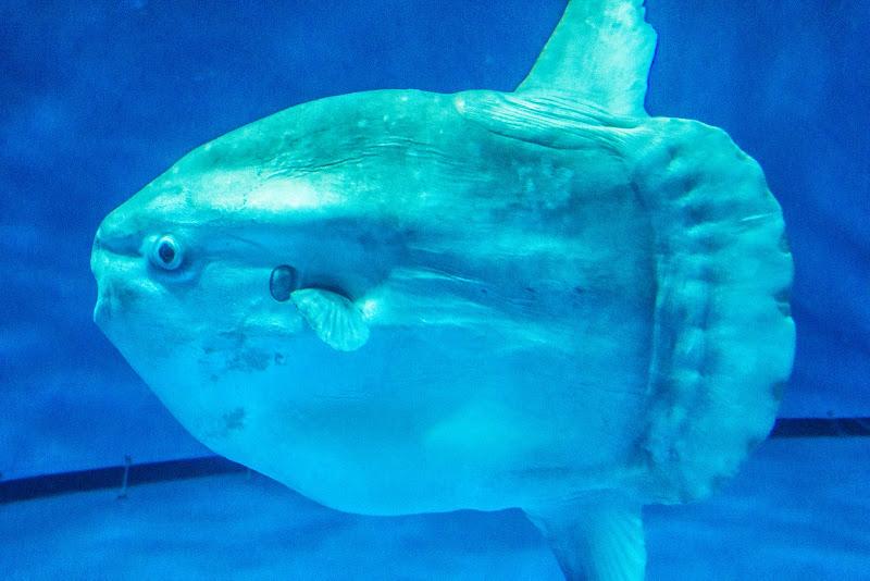 アクアワールド大洗水族館 写真7