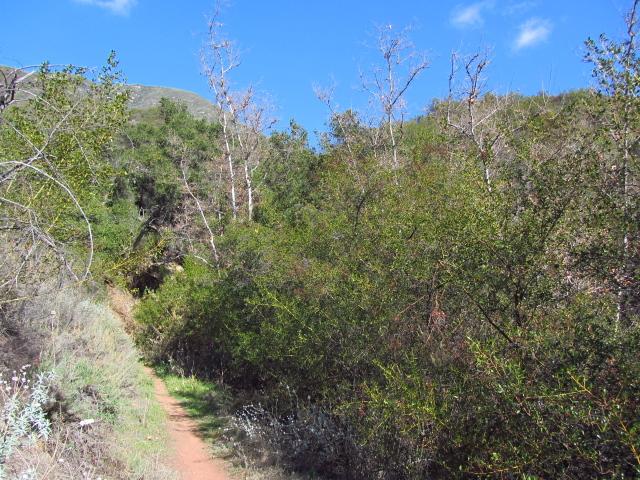 a good trail