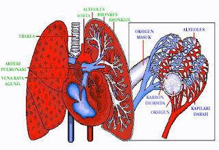 smart_ebook: Sistem Pernapasan (Sistem Respirasi)