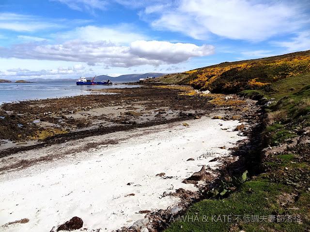 【福克蘭群島探索之旅】CARCASS島登陸分享~三年三次南極探索旅遊系列