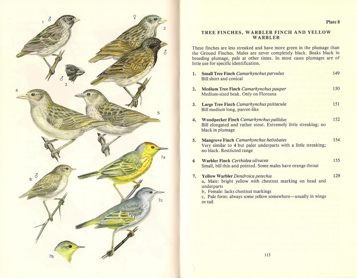 Field Guide to the Birds of Galapagos, ...