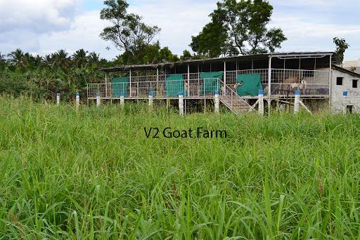 V2 Goat Farm, Narasipuram Road, Kalikkanaicken Palayam