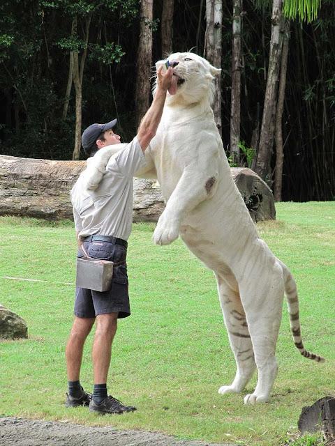 Comparação de  tamanho entre  animais  e   Seres humanos - Página 2 0226b4eccba3810227979127
