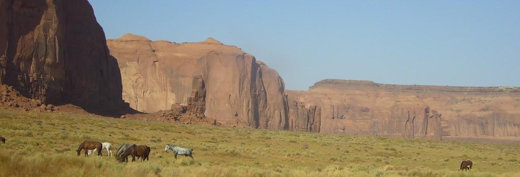 Caballos navajos pastando