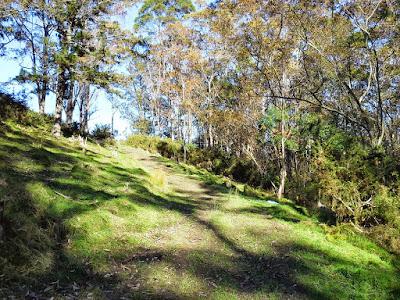 Eucalypt trail