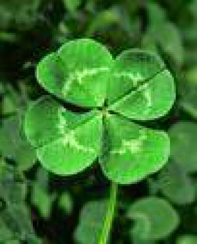 Shamrocks And Clover Generation Gapping