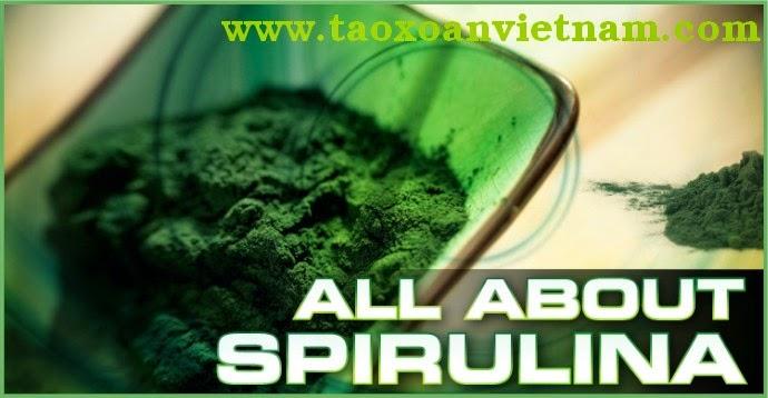Tảo xoắn tươi - tảo xoắn spirulina dạng bột