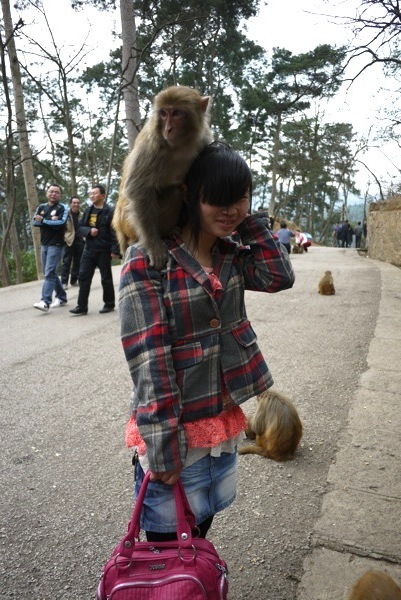 monkey sitting on girl's shoulders