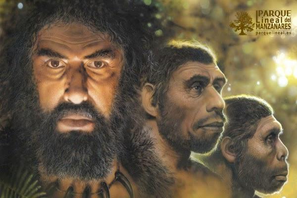 Homínidos: el origen del hombre. Ilustración Raúl Martín. www.atapuerca.tv.