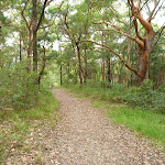Narrow trail through forest near the Awabakal car park (391694)