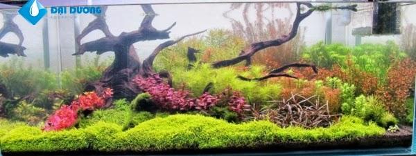 hồ thủy sinh theo phong cách hà lan 3