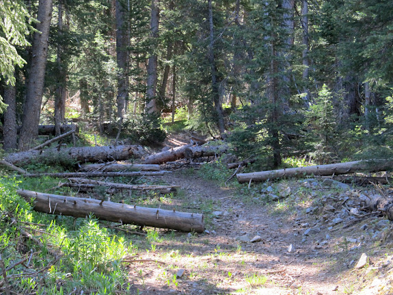 Lower trail with many downed trees