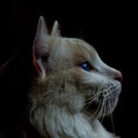 Mohcin Tahimi's avatar