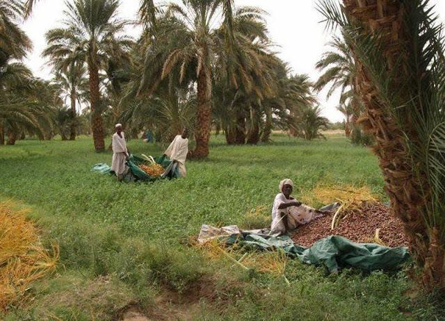 السودان 1%2520%252813%2529.j