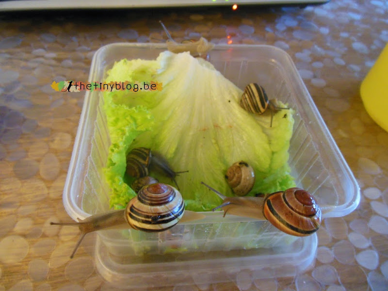 Pet snails free again