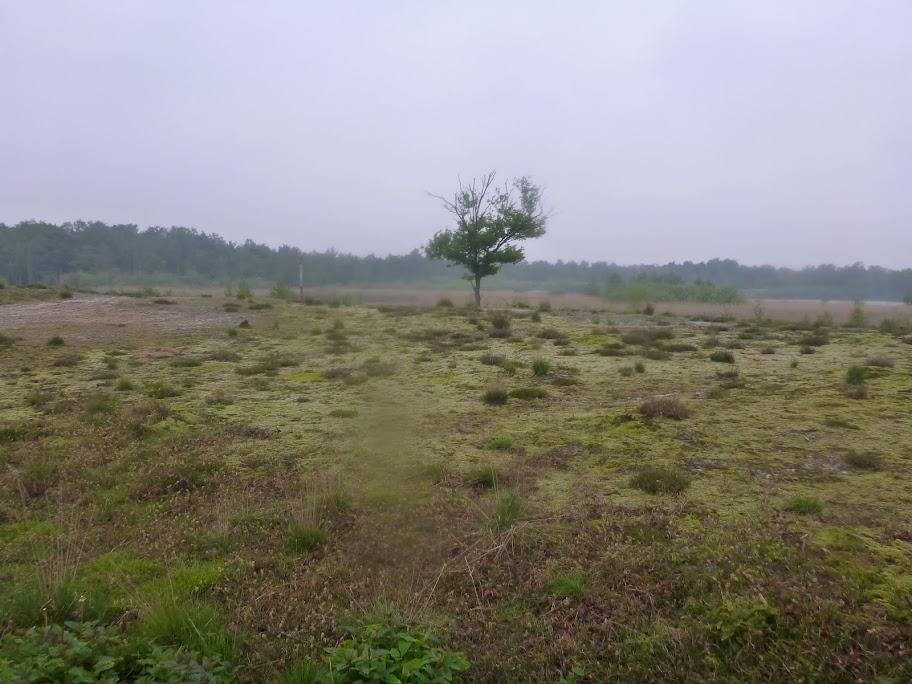 Marche Kennedy (80km) de Moergestel (NL): 18-19/05/2013 P1020722
