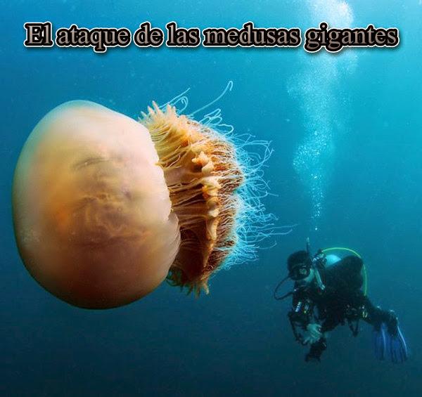 El ataque de las medusas gigantes [Discovery Max][SATRip][Espa�ol][2013]