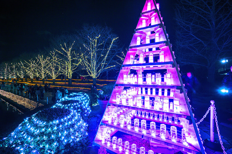 昭和記念公園 Winter Vista Illumination 写真9