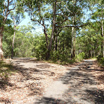 Wide trails near Mahognay Picnic Area in Blackbutt Reserve (401293)
