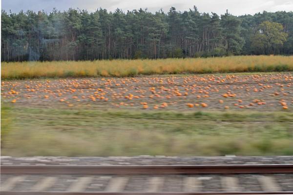 Blick auf Felder aus dem Zug