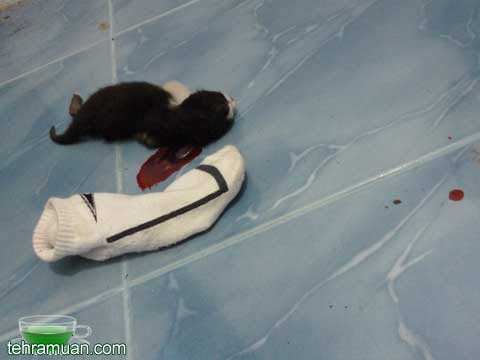 anak kucing mati