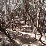 Track through the heath (103030)