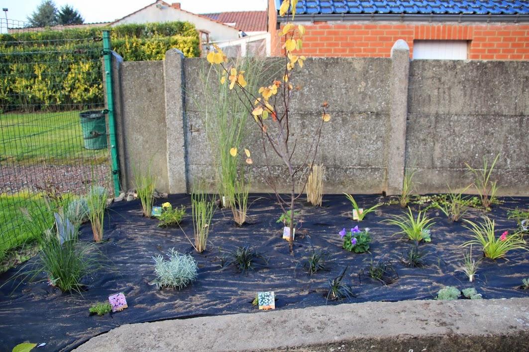 Nouvelle maison dit aussi nouveau jardin... IMG_9526