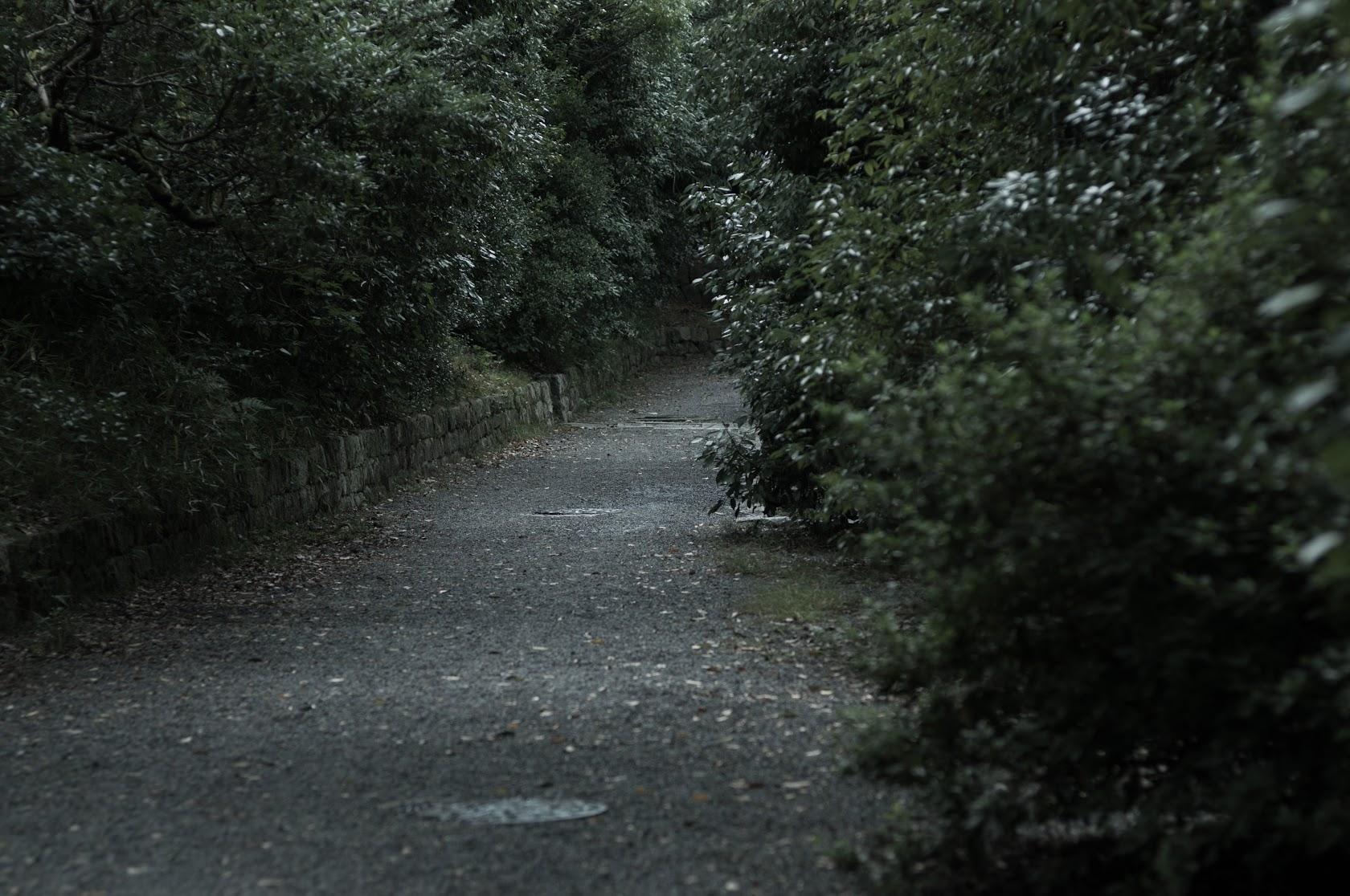 IMGP6589.jpg