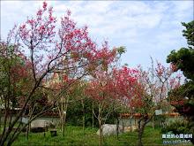 清水岩寺牌樓旁的小小櫻花林