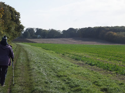 Looking toward the woodland on Mardley Heath