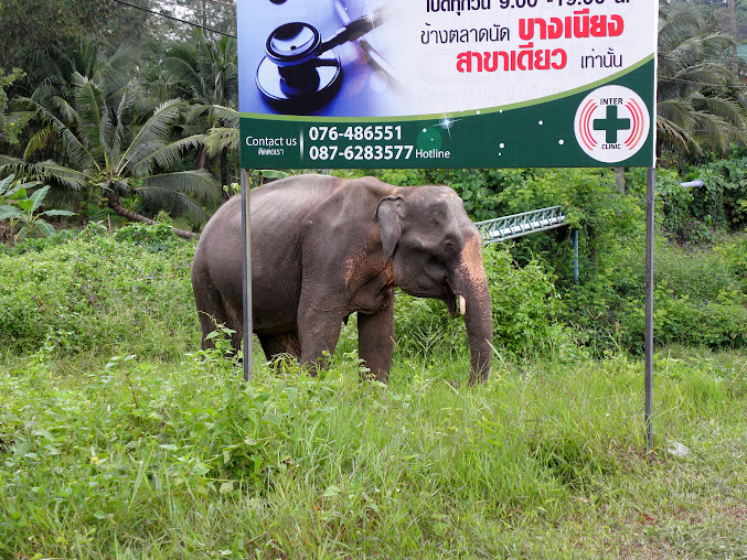 https://lh5.googleusercontent.com/-UwLV-goKfak/Up0XdHwpeaI/AAAAAAAAEy8/UqTTCO-crlE/w677-h508-no/Tajlandia+2013+951.JPG