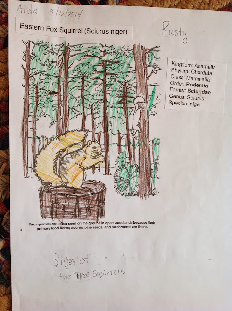 Coloring Page Chatterer The Red Squirrel